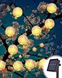 Miglior lanterne lanterne – Recensioni e Prezzi del 2021